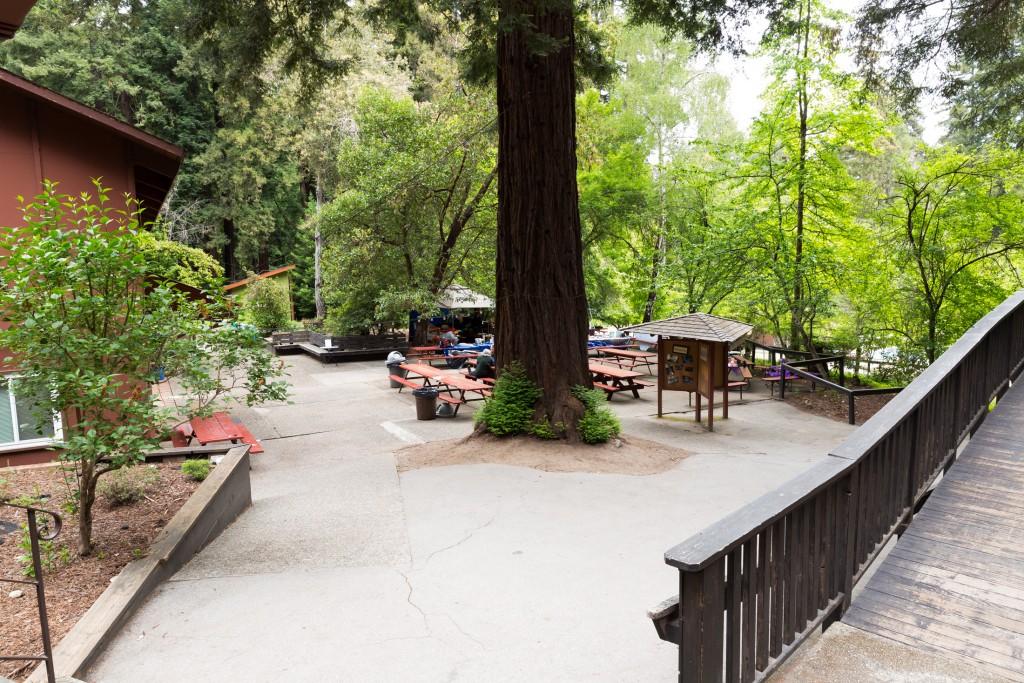 Camp DZR is held at Mt Cross in Ben Lomond, CA