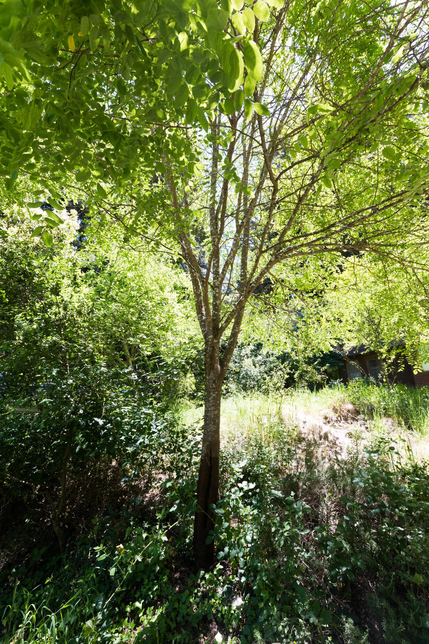 Founder's Tree